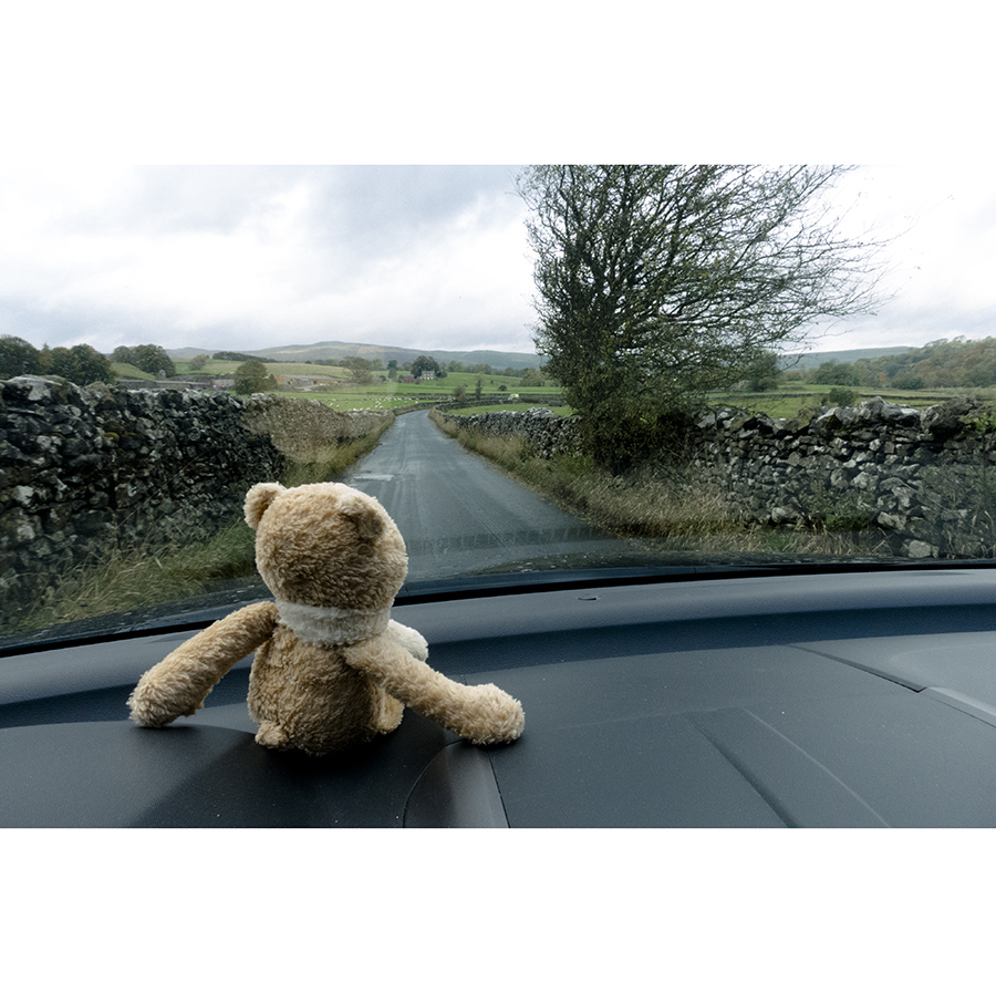 A bear in Yorkshire